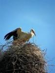 Самцы прилетели