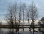 паводок в Бресте